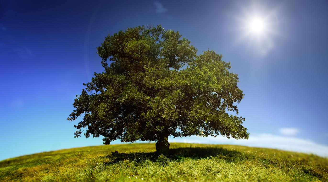 дерево дзя